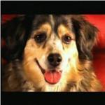 dollydog