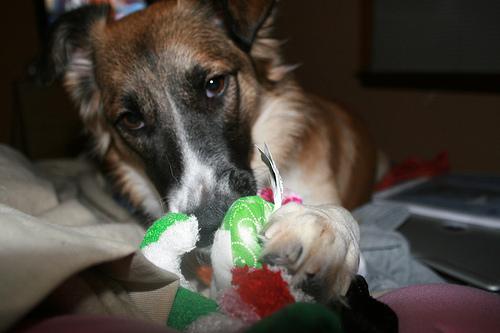 xmas-dog