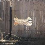Healthy Fences, Happy Dogs