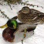 Protect Animals From Winter Weather by Guest Blogger