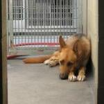 Blaming the Wrong Party for Pet Store and Breeder Sales by Scott VanValkenburg