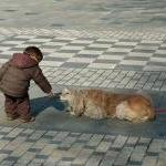 Safety Tips For Kids: How to Handle Strays By Michelle Rivera