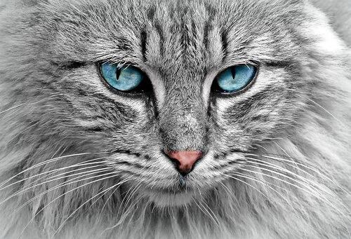 PETA Prime: Reading Your Cat's Eyes
