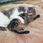 Prime Cat Poll: Which Cats Are the Most Affectionate? by Kerry Anderlik