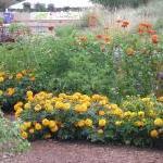 Natural and Harmless Alternatives to Garden Pesticides by Elizabeth Bublitz