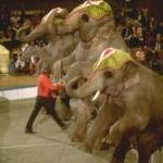 Victory! Ringling's German Tour Canceled by Guest Blogger