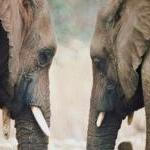 Prime Victory: Circus Sends Pachyderms Packing by Guest Blogger