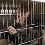 Victory: Utah Ends Mandatory Cat and Dog Pound Seizures by Guest Blogger