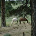 Help Wild Horses! by Kerry Anderlik