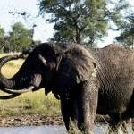 Elephants Have Lost a Great Friend by Guest Blogger