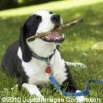 Why Giving Your Dog a Bone Can Be Dangerous by Dr. Barry Kipperman