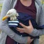 PETA Employee Rescues Gull! by Guest Blogger