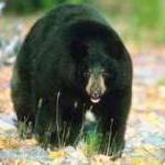 Prime Action Alert: Help Us Stop the Bear Slaughter! by Steve Martindale
