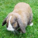 lisa_rabbit_7-2010_007