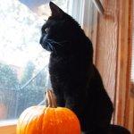 halloween-kitty