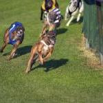 33 Dead Greyhounds Found at Racetrack by Guest Blogger