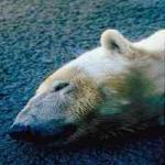 A World Without Polar Bears by Lisa Towell