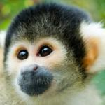 Nasa Grounds Monkey Radiation Experiments