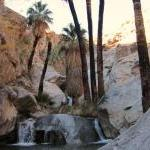 murray-canyon-7-sisters-waterfalls-by-burnt-trunk-palms