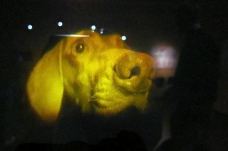 mit-150-hologram-dog