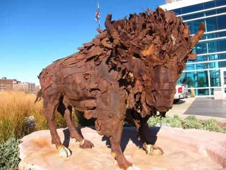 buffalo-cherapa-lr