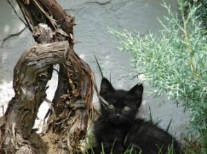 Disaster cat.