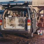 van dog on cage