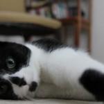 portraits_cats_misc_cats_001