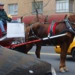8204_Horse-Drawn-Carriage_5F00_sweaty-horse1