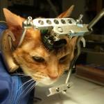 UW-madison-cat-experiment