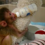 Baby-Monkey-with-Cloth-and-Bottle1