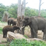 Sunder-Meeting-Elephants-Again-at-Sanctuary