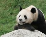 500_2D00_332-panda-198x120