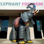 martindale_peta_elephant460
