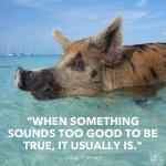 swimming-pigs-caribbean-WOV460