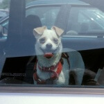 dogs_2D00_in_2D00_hot_2D00_cars500