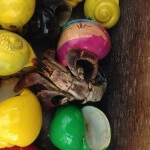 A PETA investigation of a hermit crab dealer in Florida. A hermit crab out of his or her shell. The shells are brightly painted.