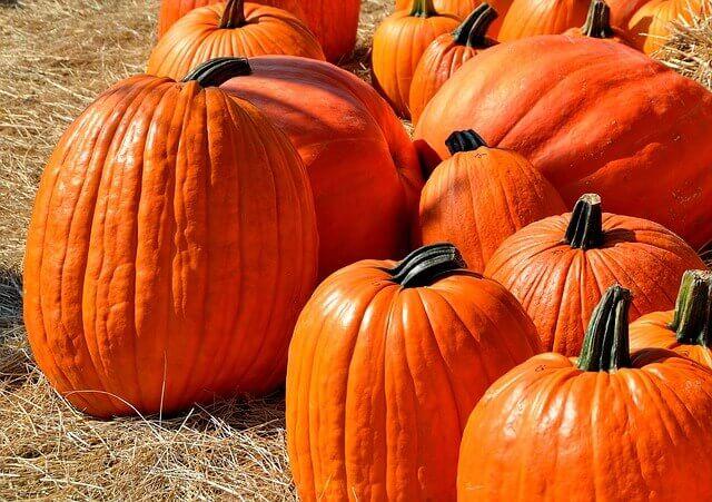 pumpkins-1572864_640