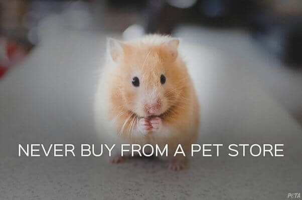PETA Prime: Buyer Beware—Chewy com Has Been Purchased by