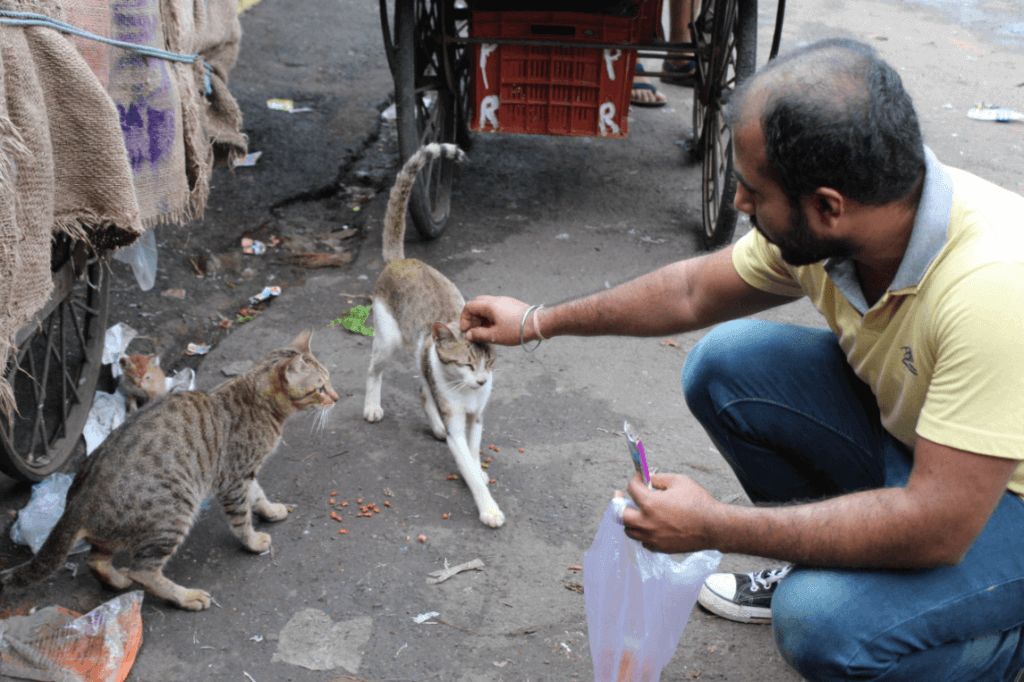 Peta prime how peta india is fixing a cat astrophe so far theyve spayed or neutered 51 cats and vaccinated them for rabies theyve also given several cats veterinary care for injured tails and other sciox Image collections