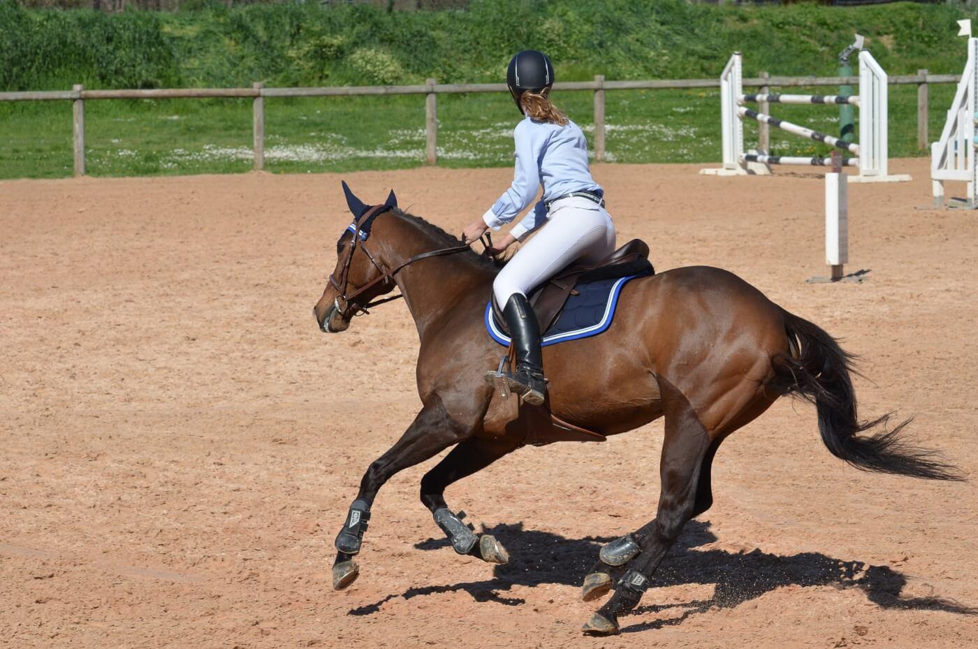 PETA Prime: Why My Love of Horses Made Me Give Up Horseback