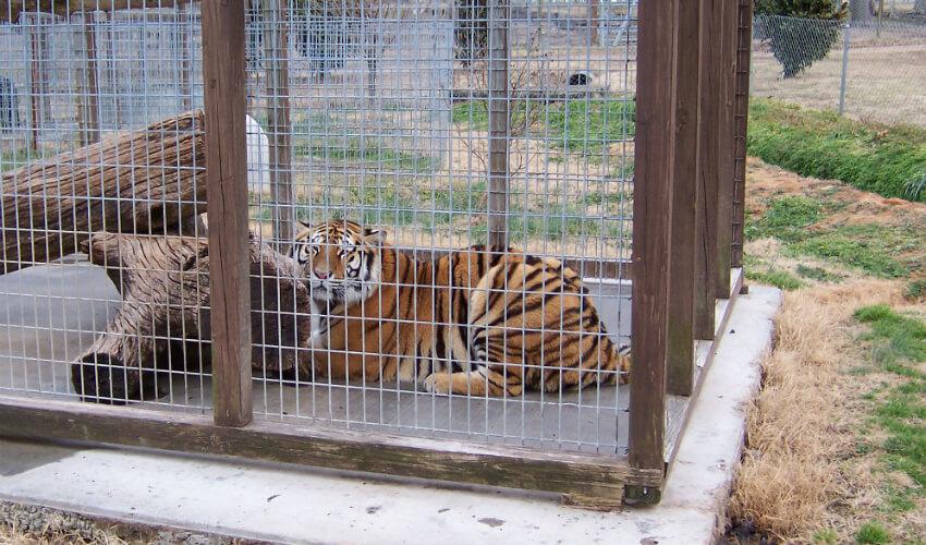 PETA Prime: Don't Let a Stop at a Roadside Zoo Spoil Your Trip