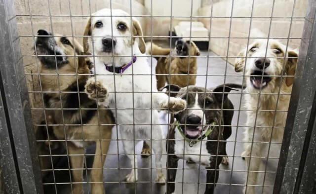 PETA Prime: Why People Abandon Animals